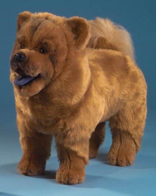 hund-6